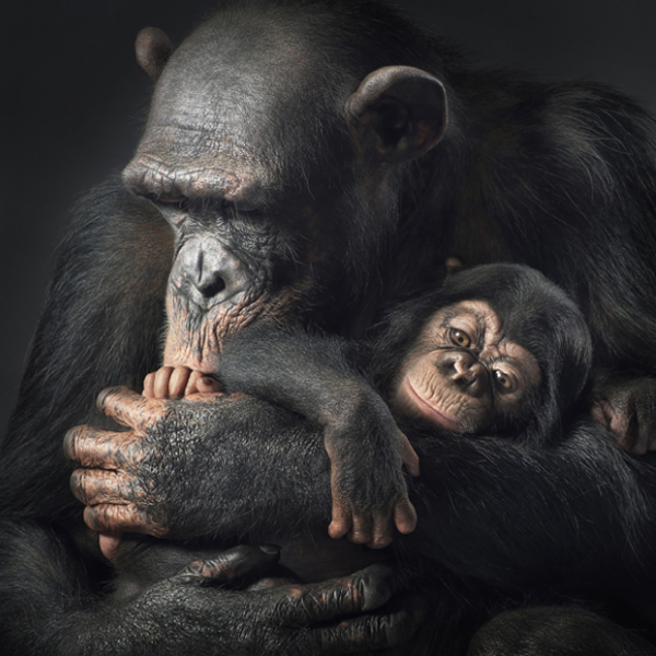 фотографии, животные, Art, «Больше, чем человек»