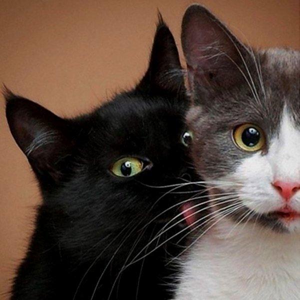 Фото, Grumpy Cat, Youtube, Twitter, Facebook, соцсети, общество, По секрету: как делать умилительные фотографии котиков и кошечек?