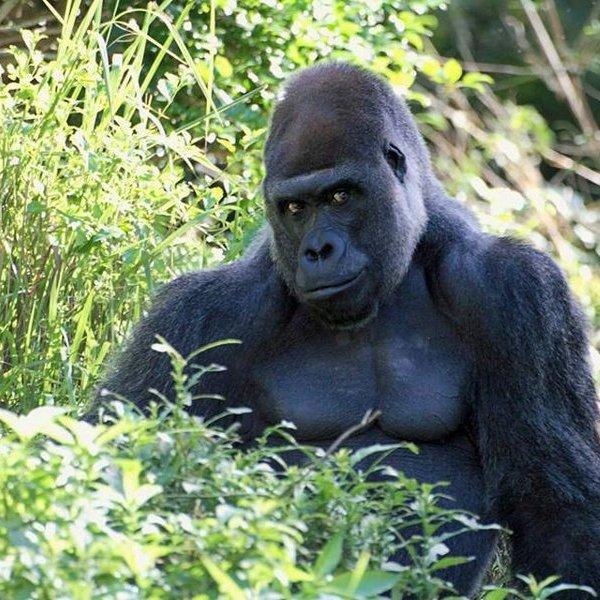 Исследование,психология,мозг,природа,животные,фауна,эволюция, Недавнее исследование: некоторые виды птиц умнее обезьян