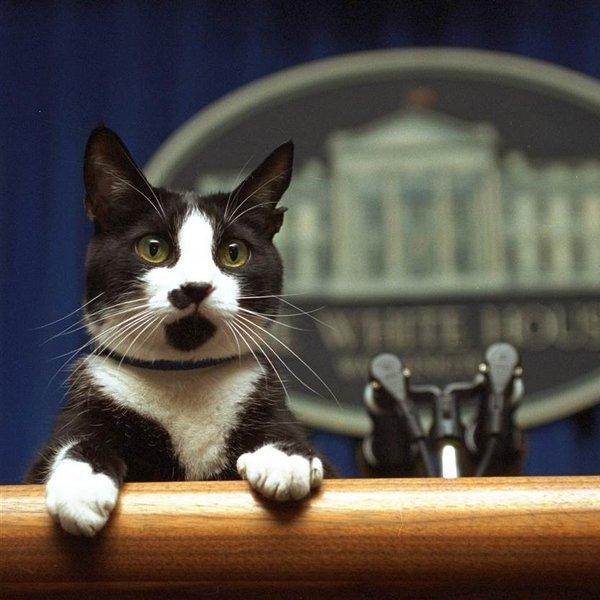 США, история, животные, Обитатели Белого дома: домашние питомцы президентов США